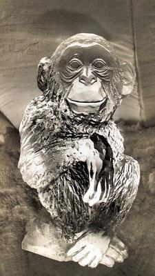 Chimpanzé - Sculpture sur Glace - Village Igloo Avoriaz - hauteur 1m - Manon Cherpe