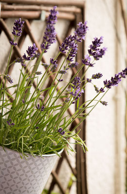 Lavendel sorgen für entspannenden Duft