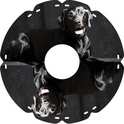 1273 Wasserhund