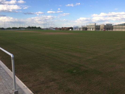 Das Gras wächst (Großspielfeld)