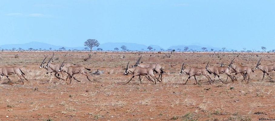 Eritrea-Spießbock