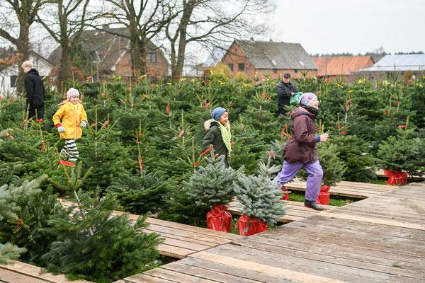 Weihnachtsbaumverkauf 2018 | Spargelhof Bolhuis