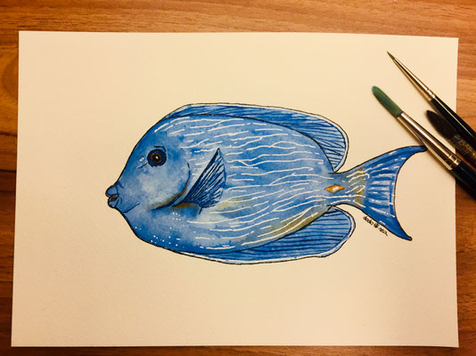 """Atlantic Blue Tang/ Blauer Doktorfisch"" painted with seawater from the beach in Barbados"