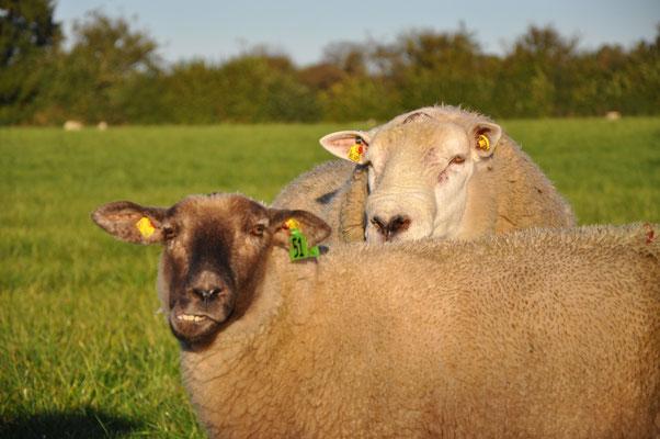 Ingo und ein Schaf.