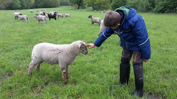 Nachbar Nils begleitet mich bei der täglichen Tierkontrolle.