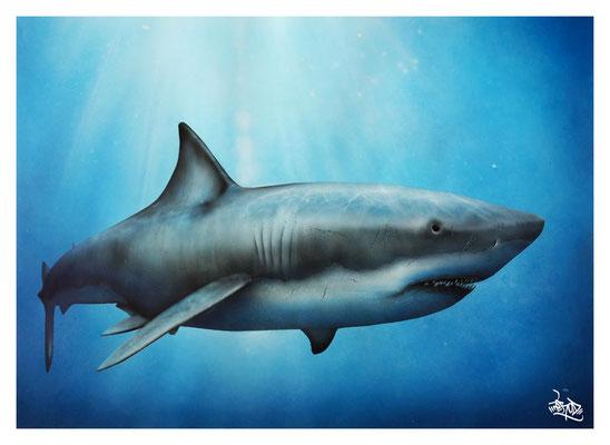 Requin. 2013