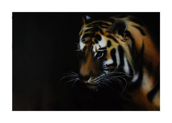 Tigre. 2013