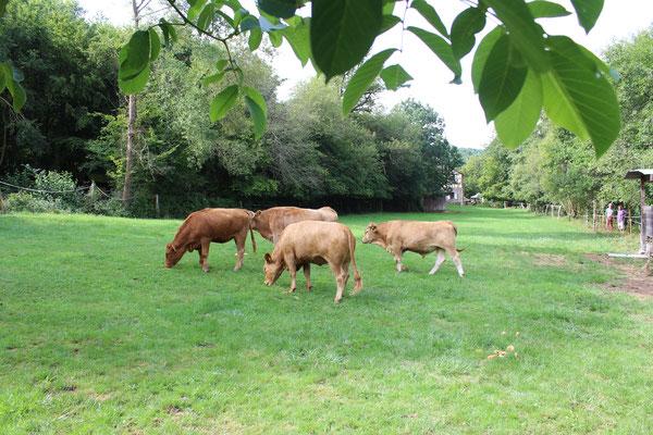 Amadeus und die Herde mit Amanda, Lisbeth & Liatrix