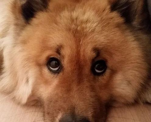... der Blick ist genauso, wie von Mama Ronja :-)))
