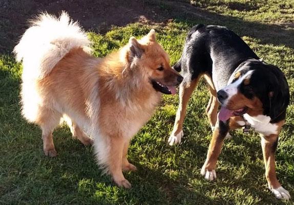 Bero mit Hundekumpel Nerlin