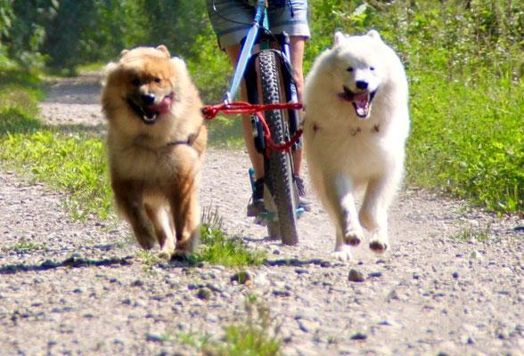 Bandi beim Dogscooting