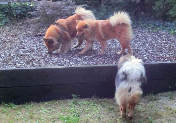 Ronja, Bonni und Ylvi