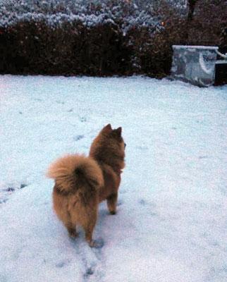 Hurrah, es hat geschneit! (26.11.2015)