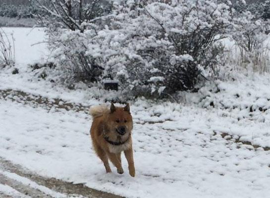 Balu saust durch den Schnee (Ende November)