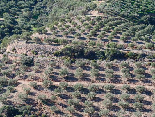 Vom Ostzipfel über die Berge und durch unendliche Olivenplantagen an die Südostküste