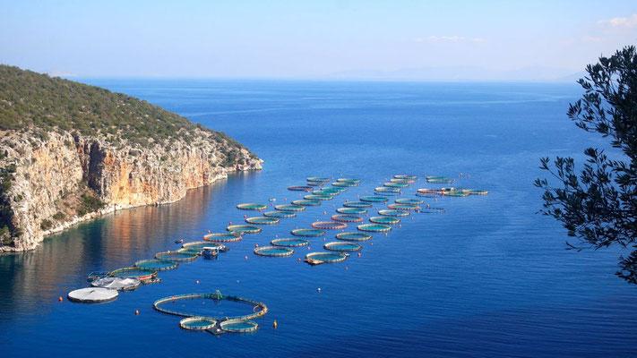 Malerischer Anblick einer Fischzucht entlang der Küste östlich von Epidauros - die Delfine sind leider bereits wieder abgetaucht!