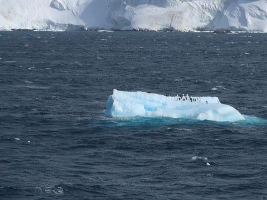 Schwimmende Pinguin-Insel