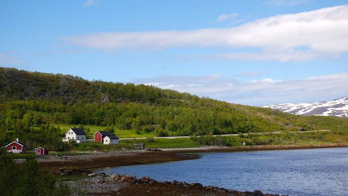 Stimmung - auf dem Rückweg vom Nordkap grünt es wieder