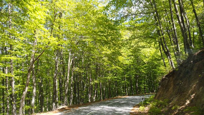Im Landesinnern von Chalkidiki, durch zartes Frühlingsgrün über den Holomondas Berg