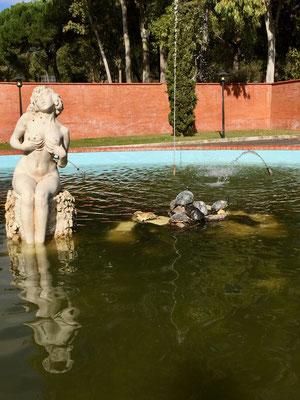Was gibt es Schöneres als ein Sonnenbad - sagen sich die gepanzerten Tiere vom Camping Lisboa