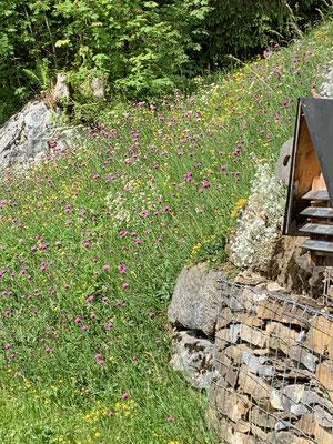 Das Wildbienenhotel bei endgültiger Frühlingsstimmung