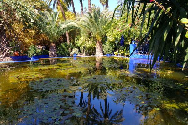 Der Jardin Majorelle von Ives St. Laurent - eine exotische Oase mitten in Marrakech