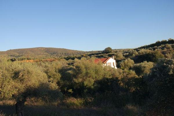 Das Ernte-Grundstück von oben