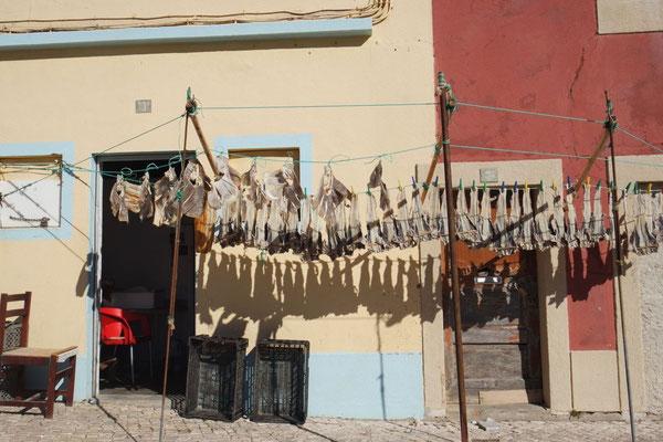 Bacalhau (Stockfisch) beim Trocknen in Peniche