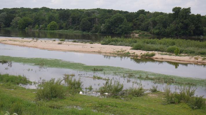 Eine Schwanen-Familie an der Loire - beim genaueren Hinsehen!