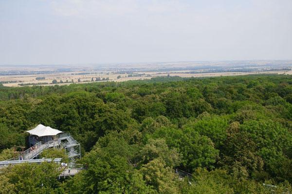 Blick vom Baumkronenpfad ins Thüringer Land