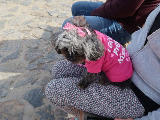 """Klein Hundi im Pink-Anzug wurde vorige Woche an der Autobahn """"vergessen"""". Die barmherzige momentane Besitzerin sucht jetzt ein Plätzchen für das Findelkind!"""
