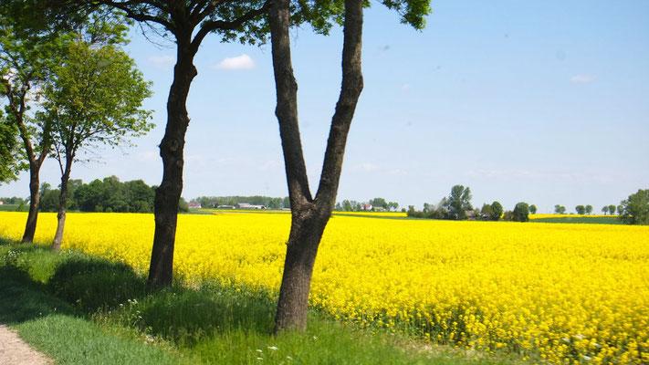 Frühling ist's in Polen
