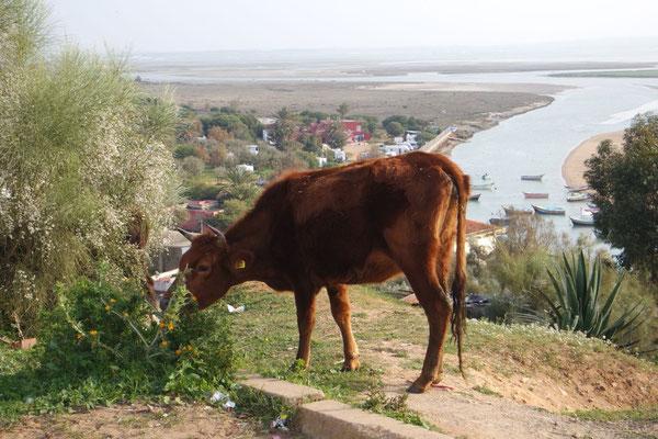 Sie geniesst beim bescheidenen Frass dafür den Blick auf die Lagune in Moulay Bousselham