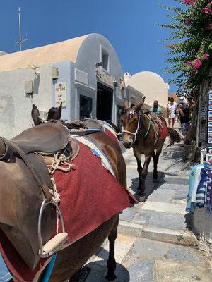 Das typisch Santorini-Transportmittel