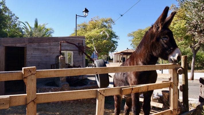 Ich bin der Schönste im ganzen Land, meint Eseli Balthazar von Alte!!