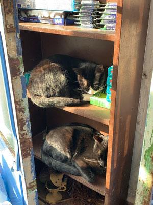Viel mehr als ein Holzregal und etwas Sonnenschein braucht es nicht für ein glückliches Katzendasein!