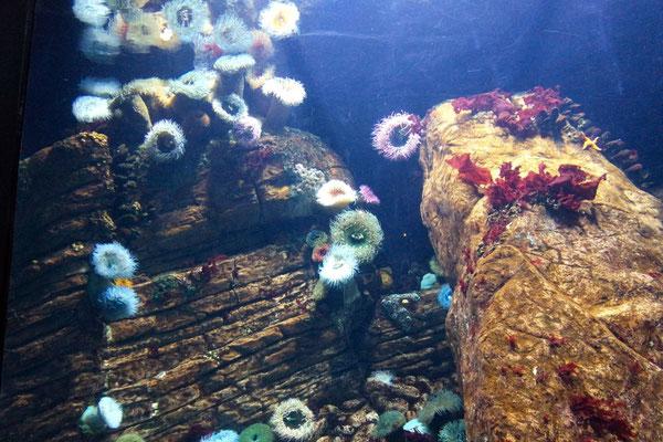 der faszinierenden Unterwasserwelt