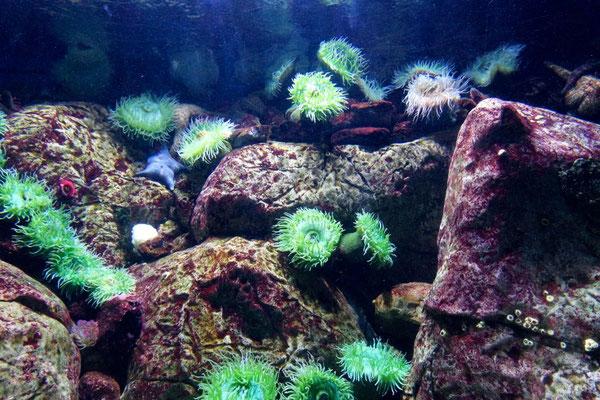 Blühender Meeresgrund