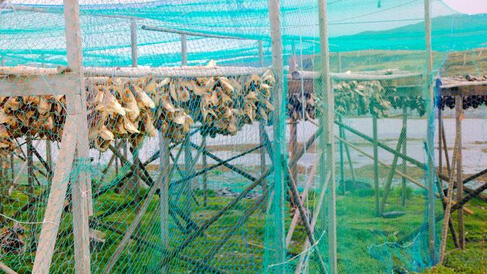In Mehamn ist der Duft der lufttrocknenden Fische ganz schön penetrant