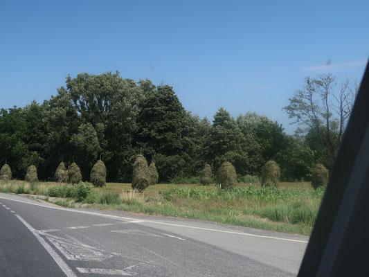 Die Heinzen gehören in Rumänien noch zum ganz üblichen Landschaftsbild