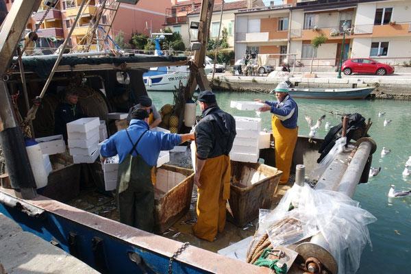 Die Fischer am Abliefern ihrer frischen Fänge