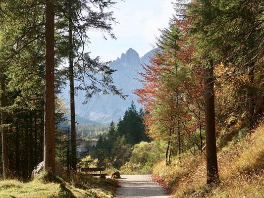 durch die prächtige Herbstlandschaft entlang dem Wimbach