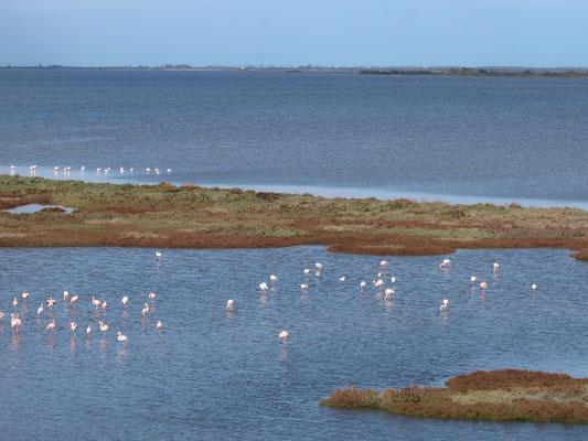 Wau - Flamingos in nächster Nähe!