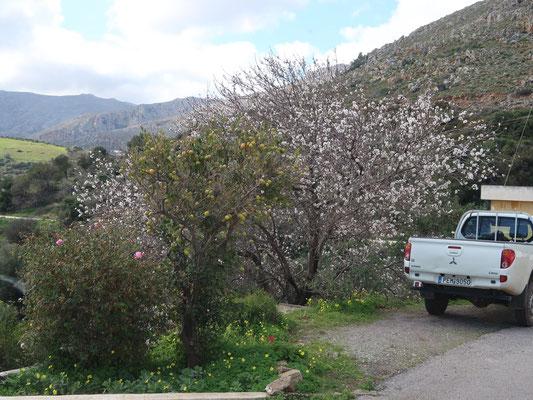 Neugierige Frühlingsboten in voller Blüte