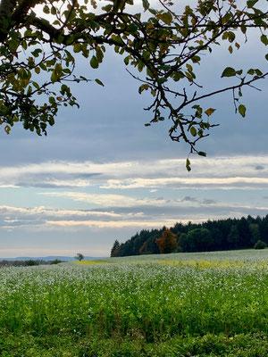 Aulendorfer Natur