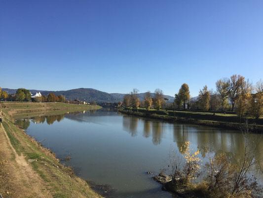 Friedliches Arno-Ufer, wo Barni gar einem Eisvogel beim Fischen zusehen konnte