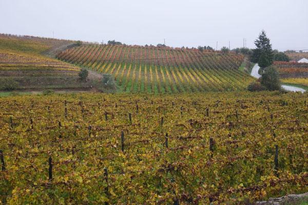 Durchs Anbaugebiet des Portweines