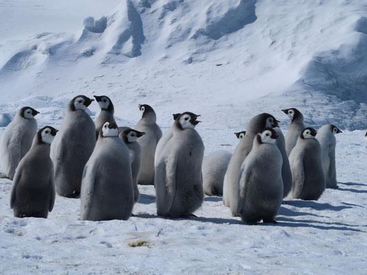 Spielgruppe in der Antarktis