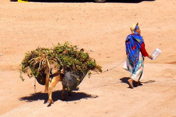 Kein seltenes Bild in Marokko