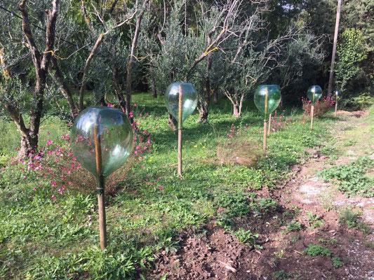 Hier wird feinstes Olivenöl produziert